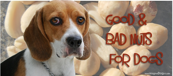 Good Nuts \u0026 Bad Nuts For Dogs -Know