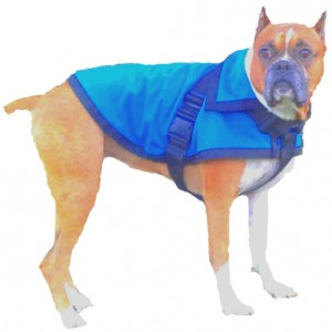 Doggy raincoat