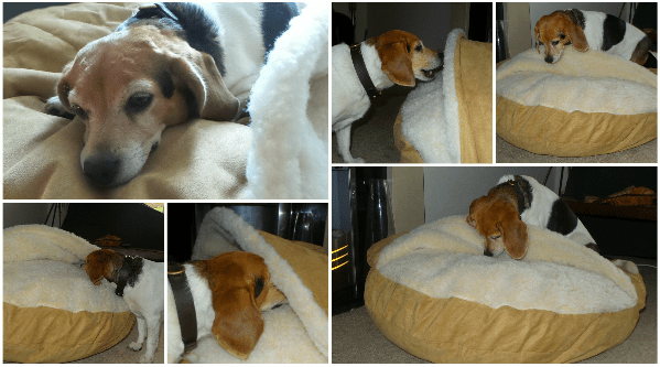 cozy cave dog bed maggie