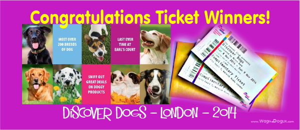 discover dogs ticket winners