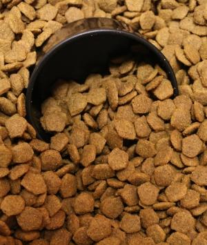 Benefits of Premium Dry Dog Food