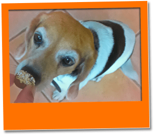 maggie eating low calorie dog treats