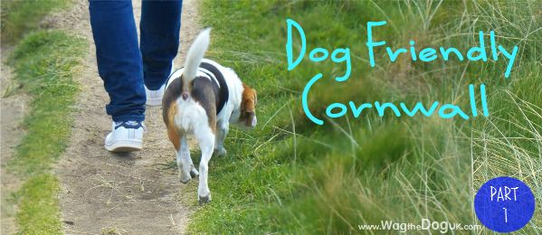 dog friendly cornwall cover