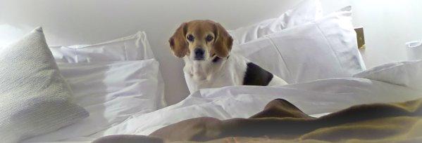 dog friendly hotel room in cornwall