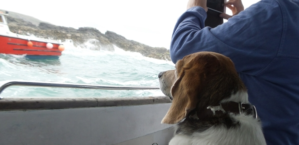 dog friendly boating