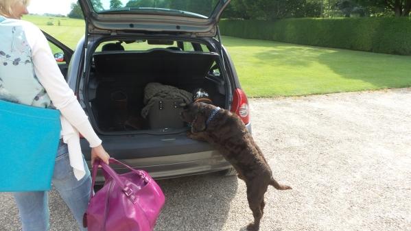 ston easton review dog greeting