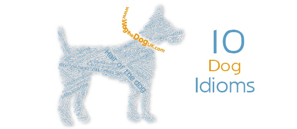 dog Idioms cover