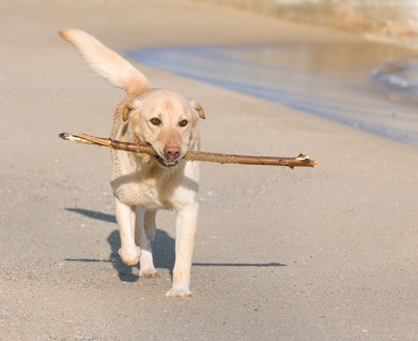 dog friendly devon Exploring the beach