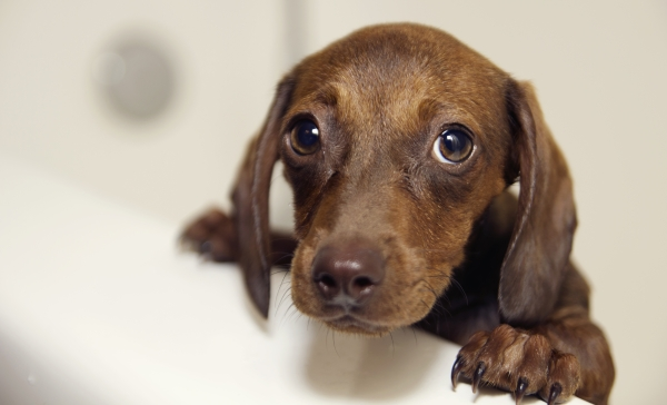 stress dog comfort