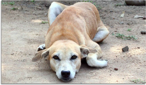 stress in dogs lying down