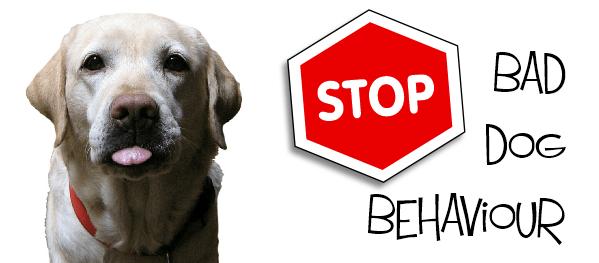 Stop bad dog behavouir
