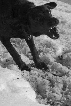 aggresive bad dog Behaviours