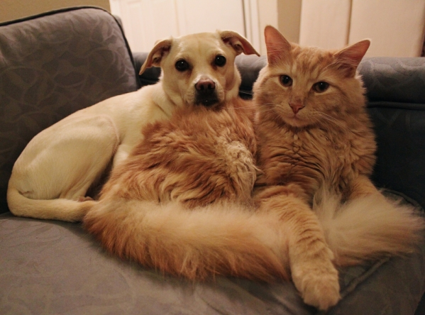 cats vs dogs couch
