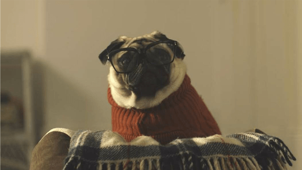 pug interview