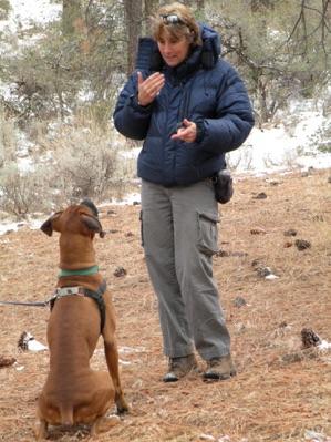 reward base dog traing calm dogs
