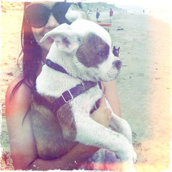 reward based dog training behavior