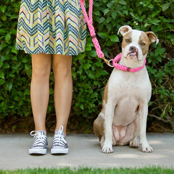 reward based dog training puppy
