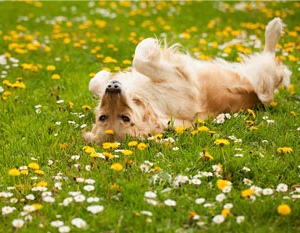 dogs body Language excited flowers