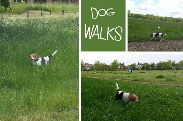 dog walks commons