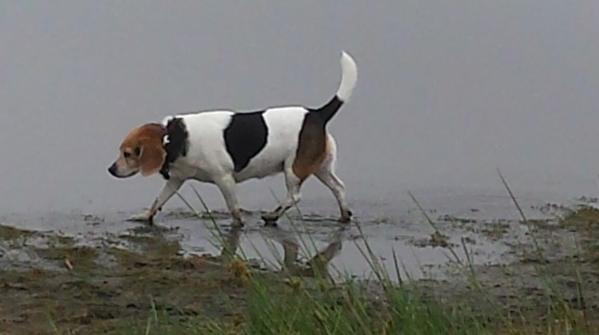 dog walks mud