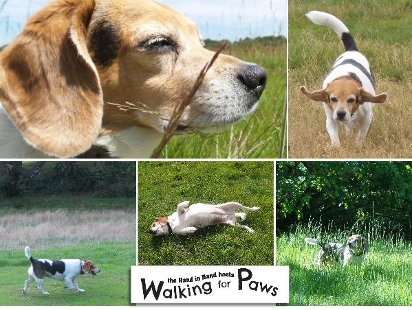 wimbledon dog walk maggie