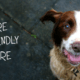 explore wiltshire dog friendly cover