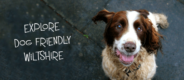 explore wiltshire dog friendly cover