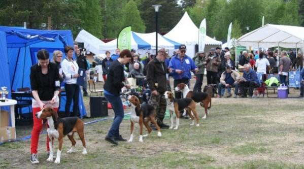 Ethical Dog Breeder cover