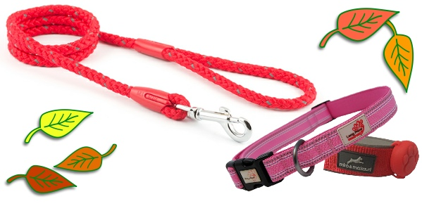 dog essential collars