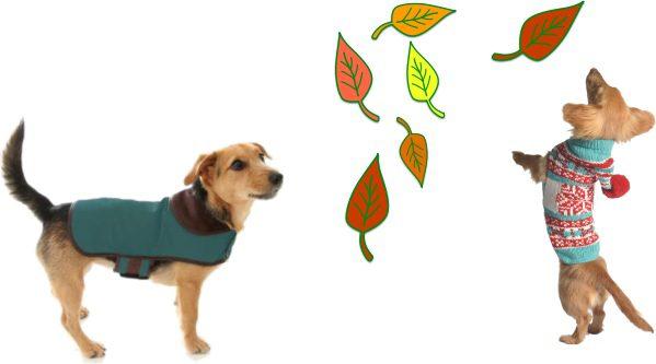 Autumn Dog Essentials