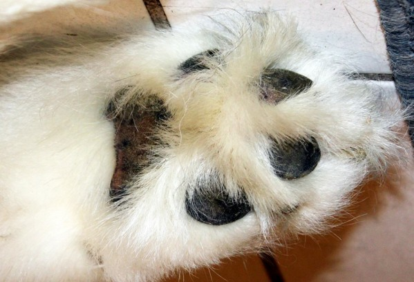 dog paw cream