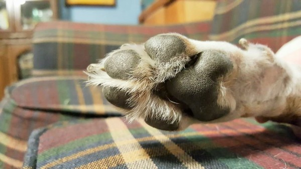 dog paw terrier