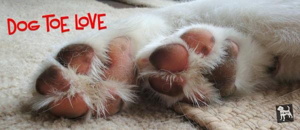 dog toe cover