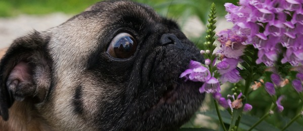 Plants That Could Poison Your Dog cover