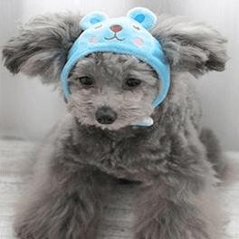doggie day wear hats