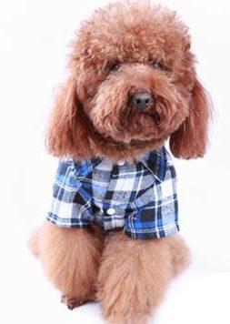 doggy day wear shirt