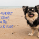 3 Delightful Dog-Friendly Locations On The Norfolk Coast