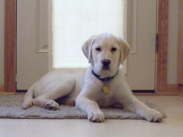 train a puppy door