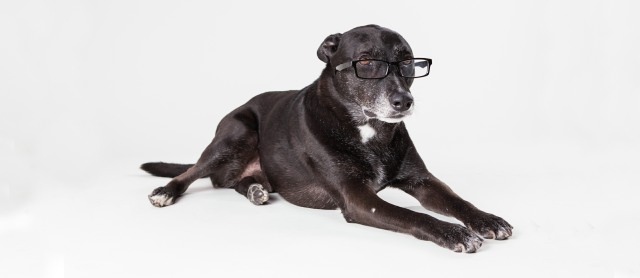 intelligent dog cover