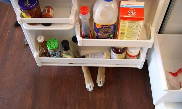intelligent dog fridge