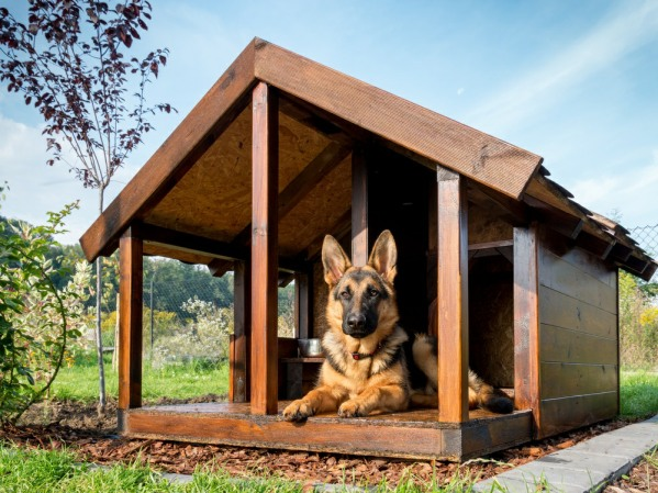 pet-friendly dog house