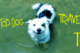 travelling with your dog cover