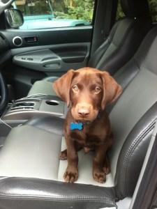 keep dogs safe in car