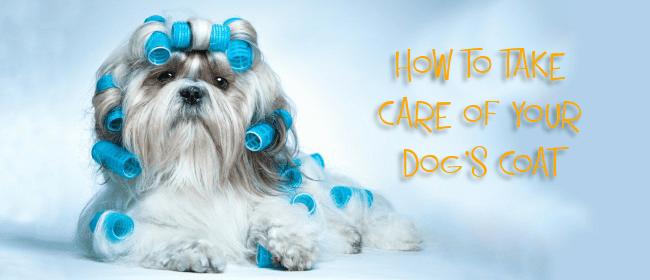 dog coat cover