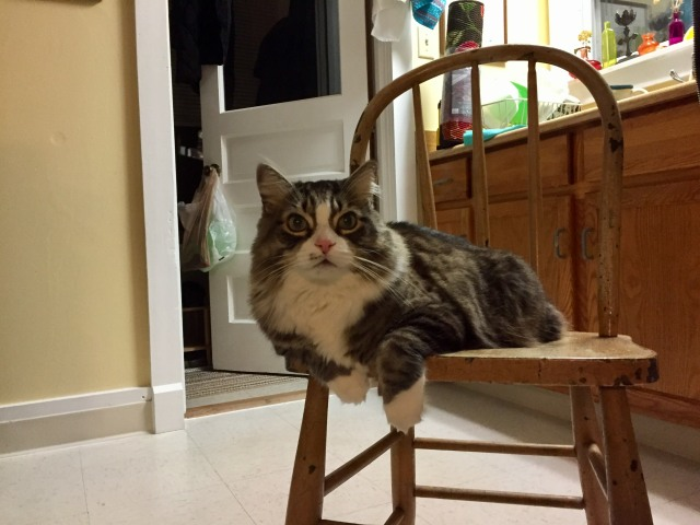 while cleaning the kitchen floor, Forest appeared on a chair to watch me and listen to me singer