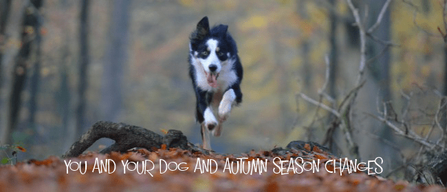 you and your dog autumn cover
