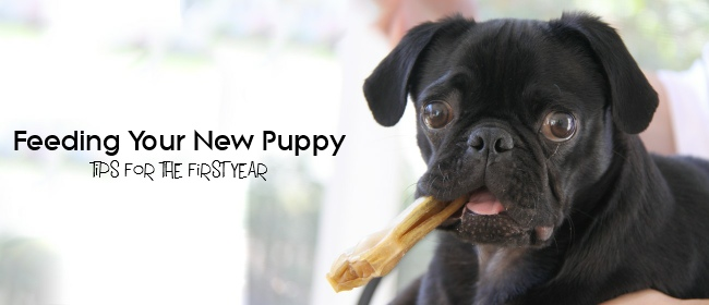 new puppy cover