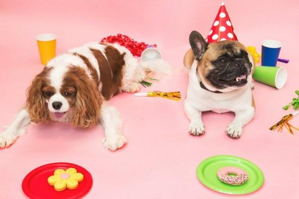dog birthday 1