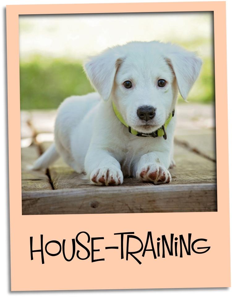 house training puppy gr