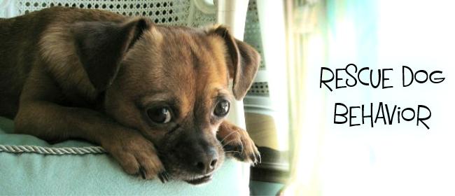 rescue dog cover